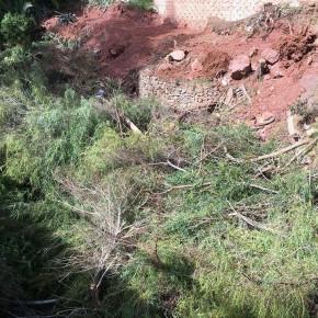 Ciudadanos Fuengirola denuncia la tala indiscriminada de árboles y abandono de restos en Torreblanca del Sol
