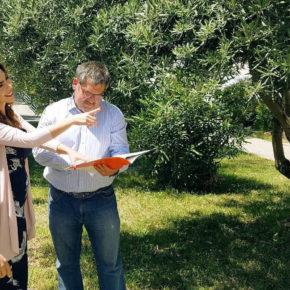 Ciudadanos reclama a la Diputación la creación de campañas específicas para controlar las plagas de la avispilla del castaño y el ébola del olivo